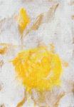 Yellow Rose b -Yellow Rose b-