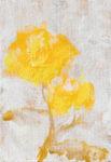 Yellow Rose c -Yellow Rose c-