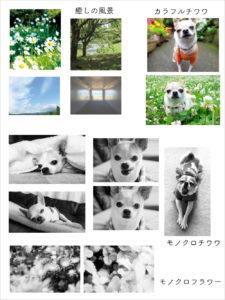 モノクロ・カラー写真